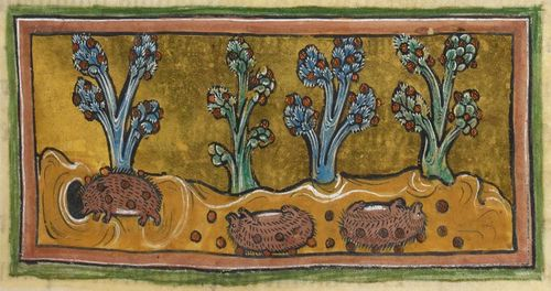 Hedgehogs in the Rochester Bestiary