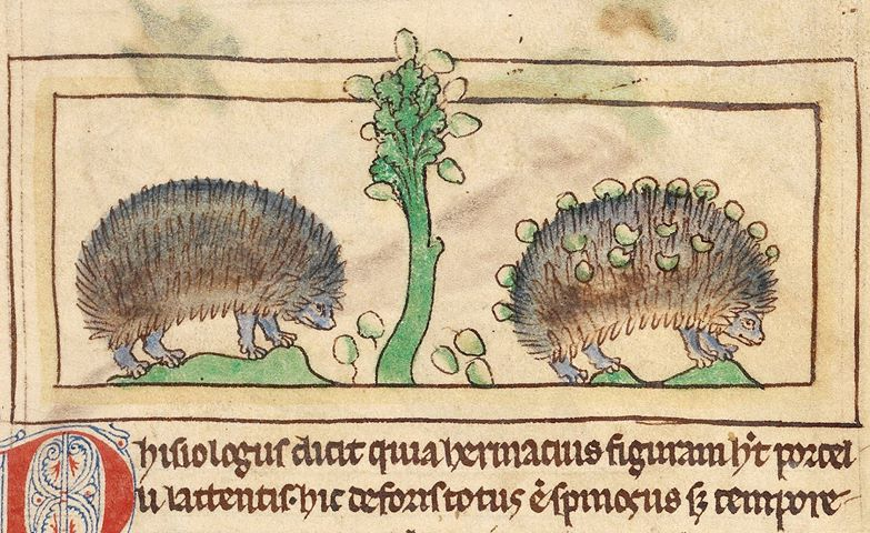 Hedgehogs2