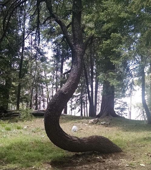 Serpentine TreeSm
