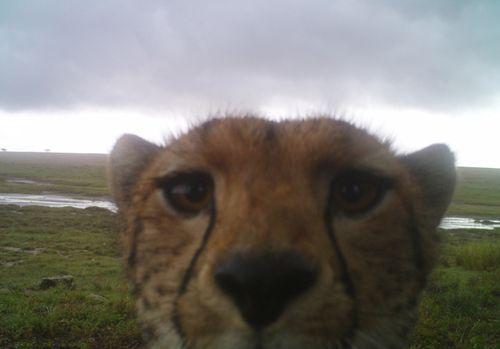 Burdick-Serengeti-17-690 (1)