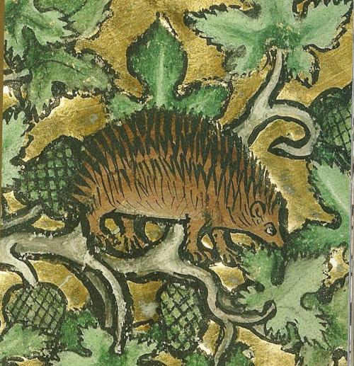 Hedgehog3sm