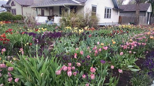 Tulip Yard
