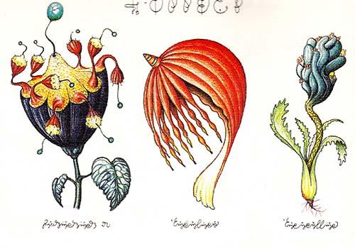 Luigi Seraphini Codex 4