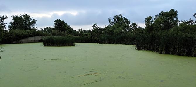 Lagoon and Duckweed670