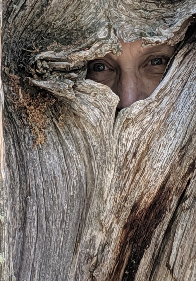 In Tree_670