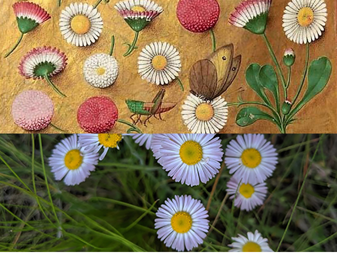 Medival and Modern Flowers670