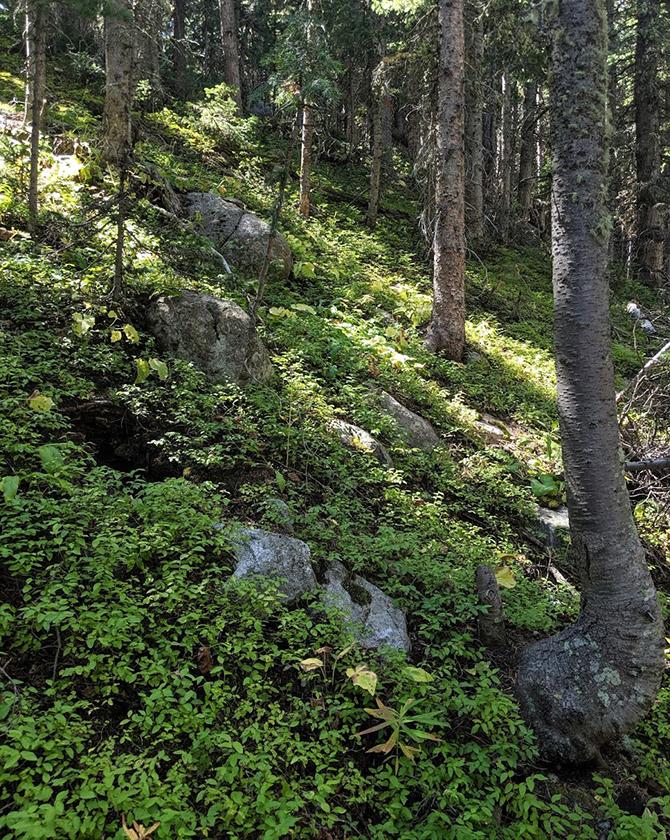 Brainard Trail 1 670
