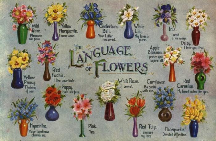 LAnguage of flowers2