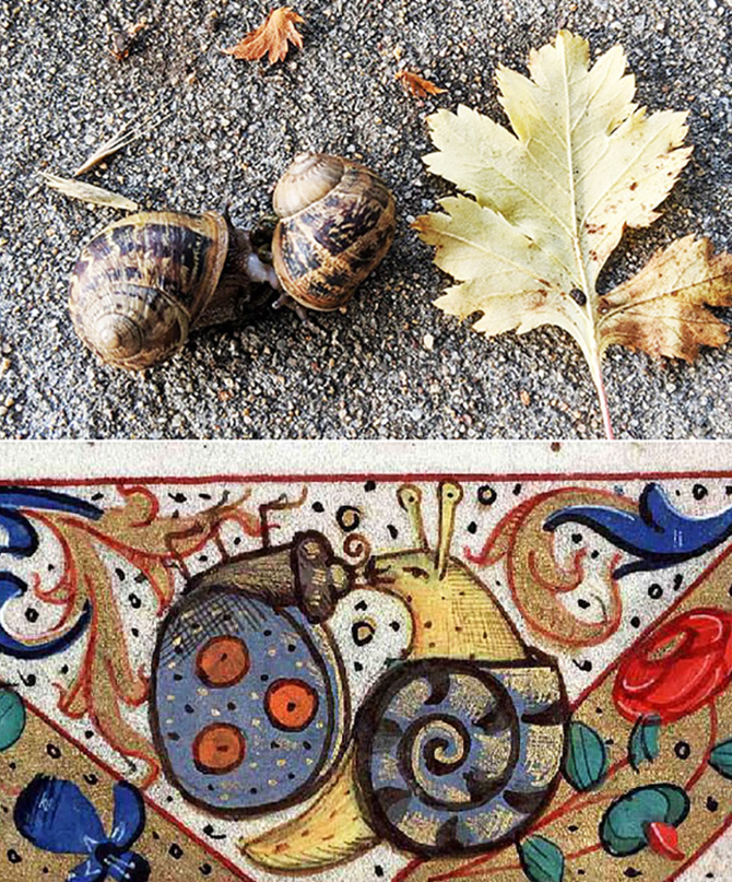 Kissing snails united 670